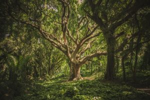 Seattle Washington Designer Christina Joan reveals a stunning photo of a tree in the woods